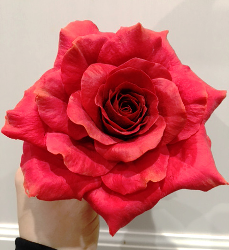 red gum paste rose